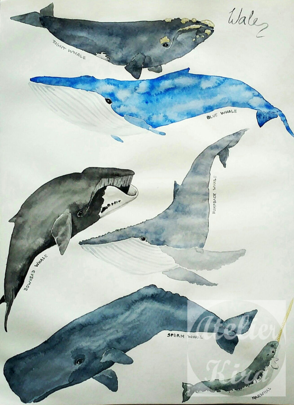"""A collection of whales"""